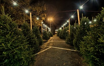 Chastain Park Christmas Tree Lot